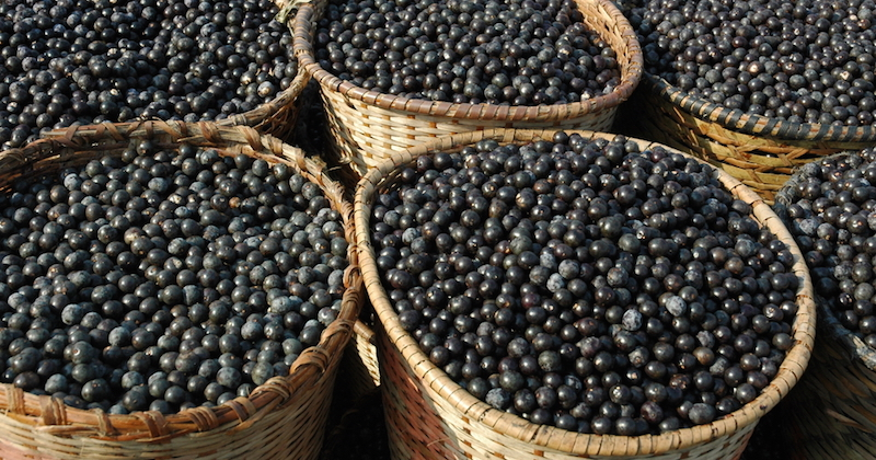 The Power of Acai Berries